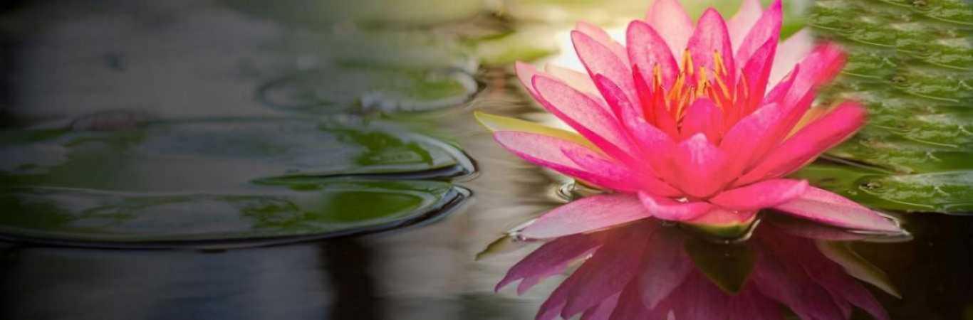 Lotus Greens  Sector 150 Image